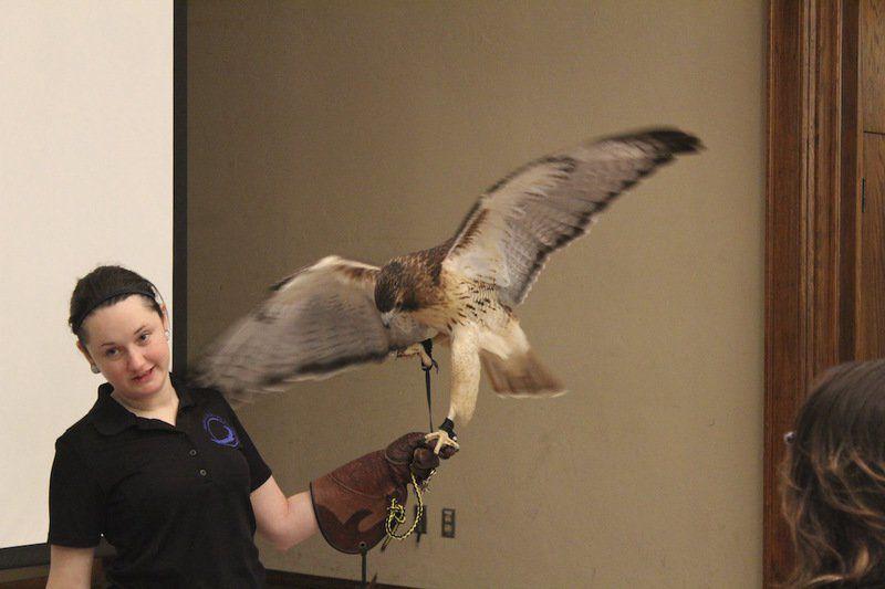 Grey Snow Eagle House saves Oklahoma birds