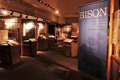 Cherokee Strip Regional Heritage Center to feature bison exhibit