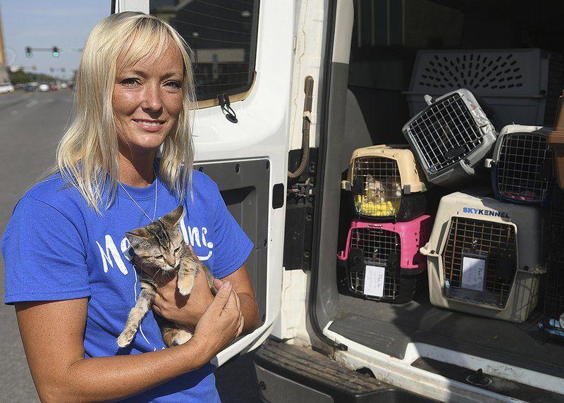 Cat rescue holding adoption event Saturday at Petsense