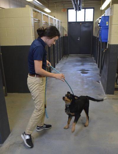 New adoption coordinator ready to help animals