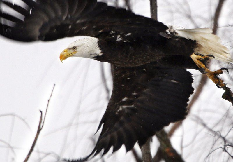 Trump overhauls endangered species protections