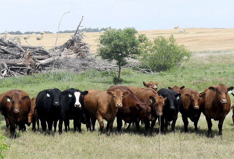 Despite wildfires, many Oklahoma ranchers don't insure cattle