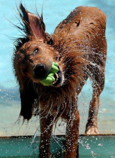 Top Photos 2016: Doggie Dip Swim Party