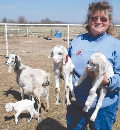 Porum woman's got your goat | News | enidnews com