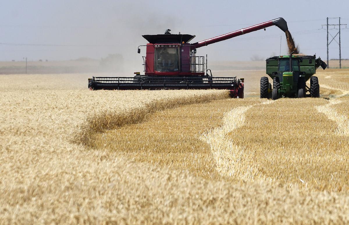 210404-progress-crops 1 BH.jpg