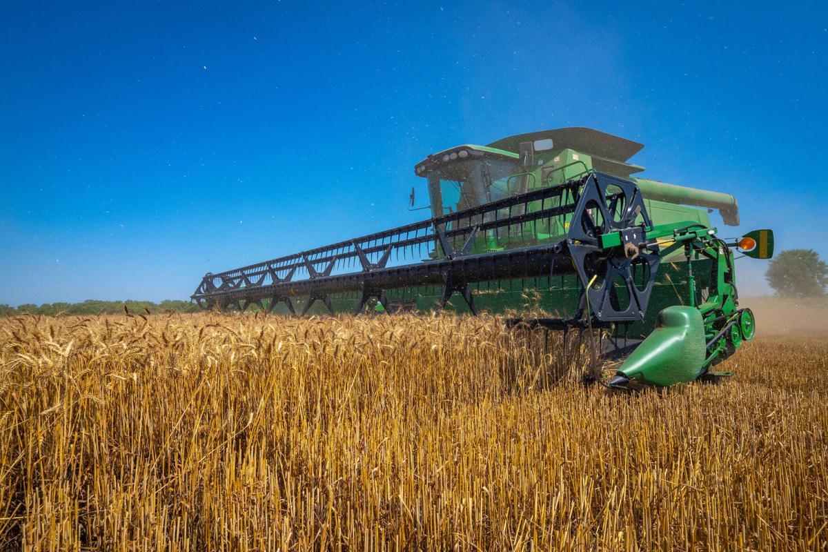 wheat harvest pic
