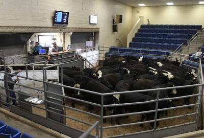 Enid Livestock Market