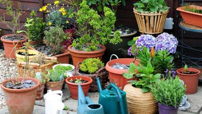 Take care to acclimate plants to indoors