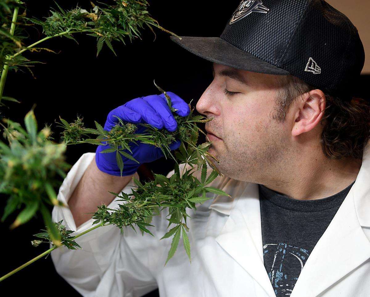 Progress Marijuana