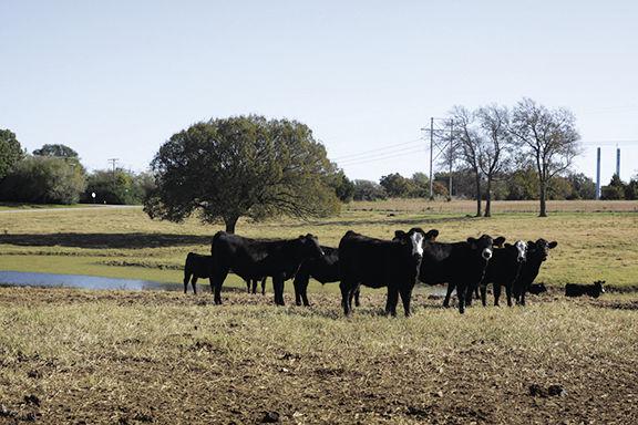 Gordon Farm