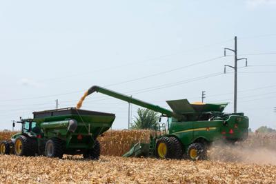 Rendel corn harvest 1