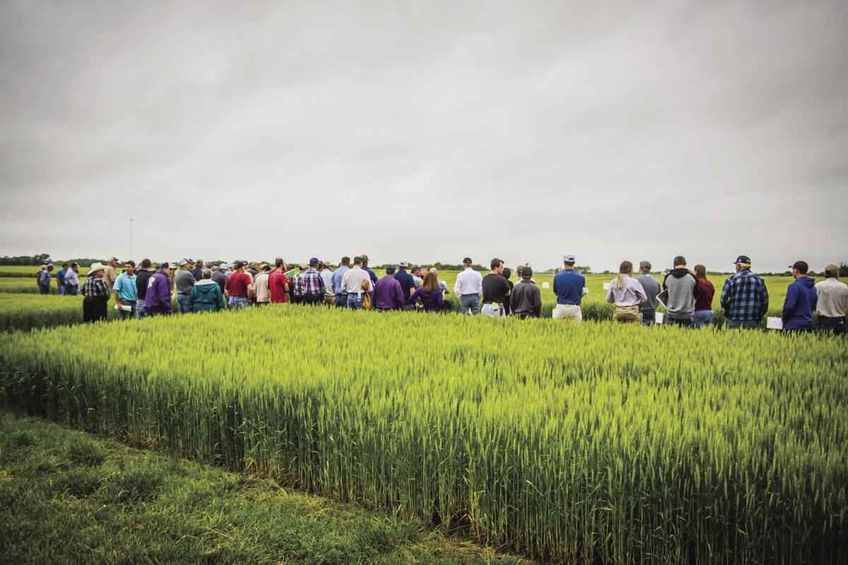 Spring Crops Field Day