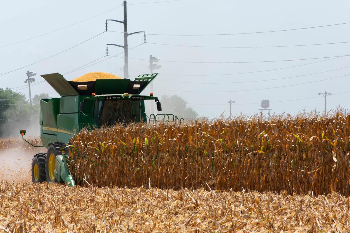 Rendel corn harvest 2