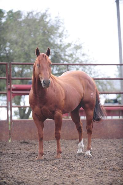 Holeman Quarter Horses