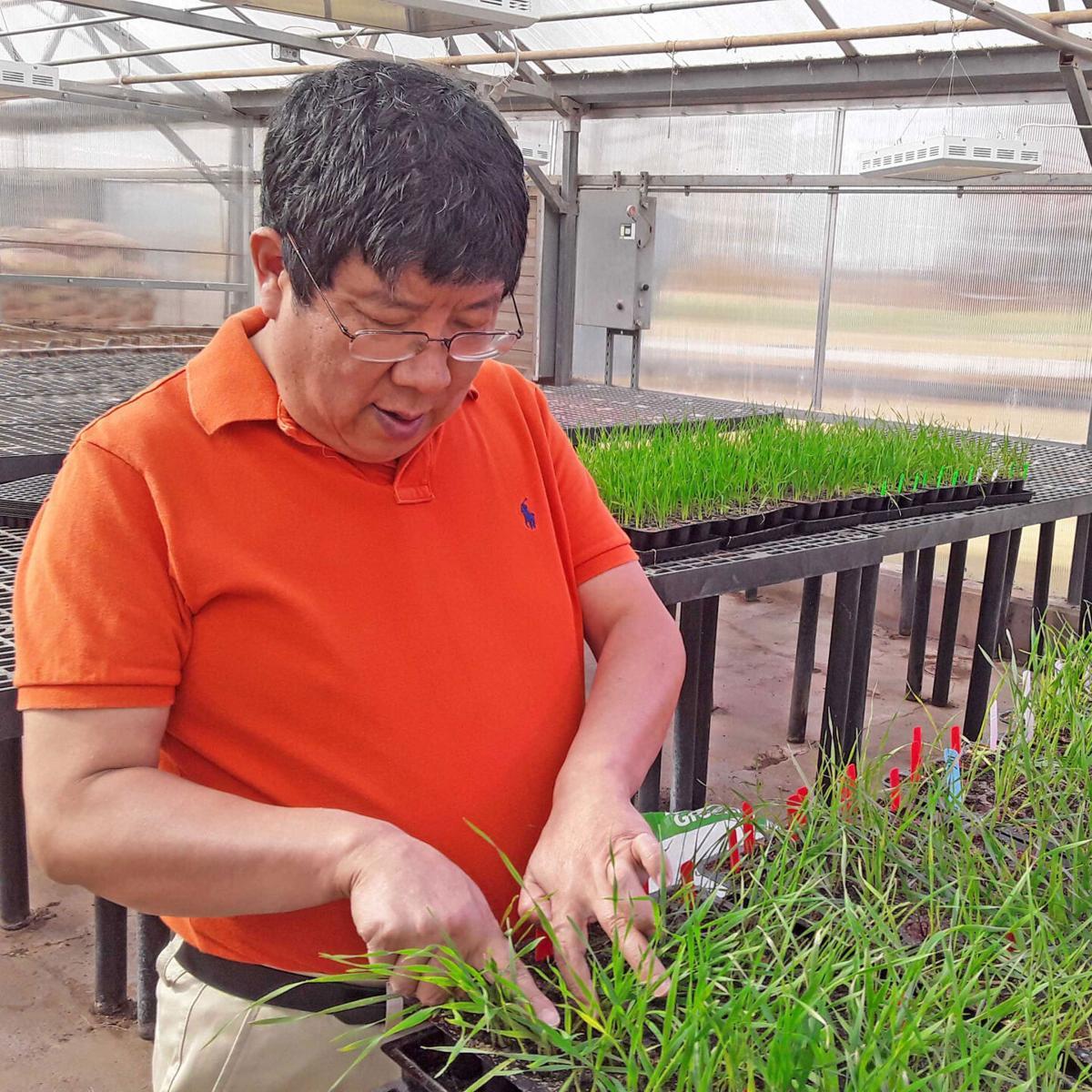 Xiangyang Xu
