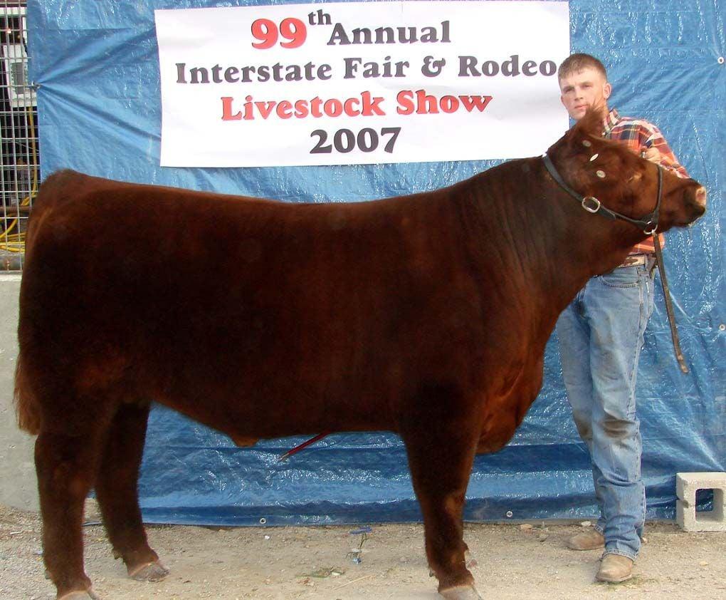 Champion steer
