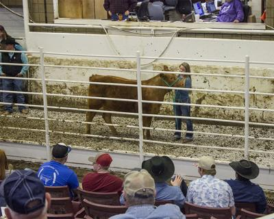 2019 Crowder Calf Auction