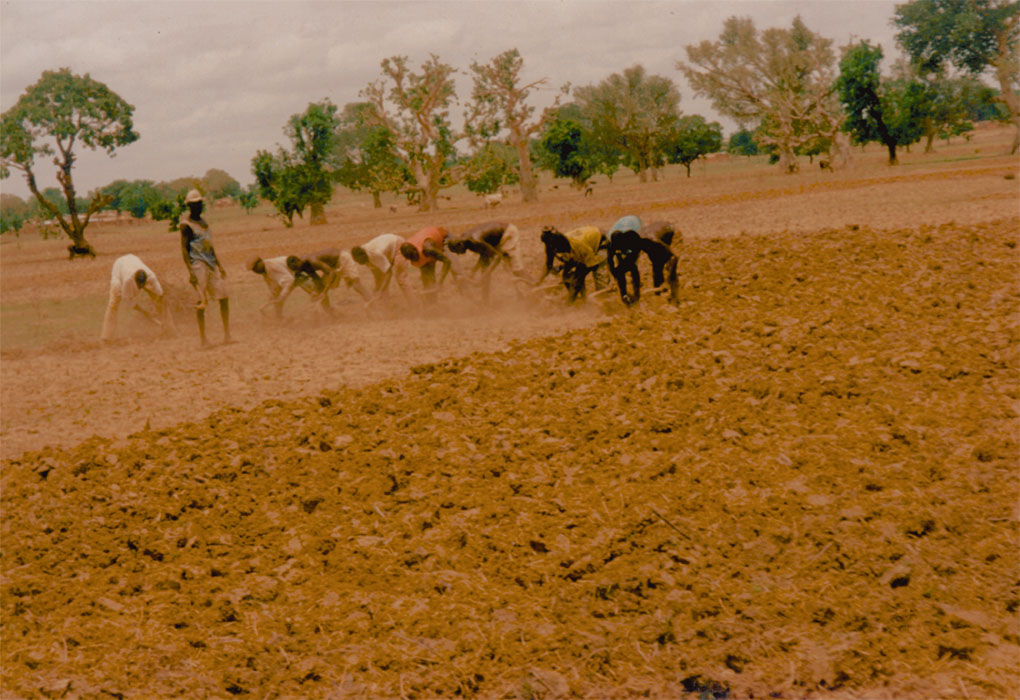 West African farmers