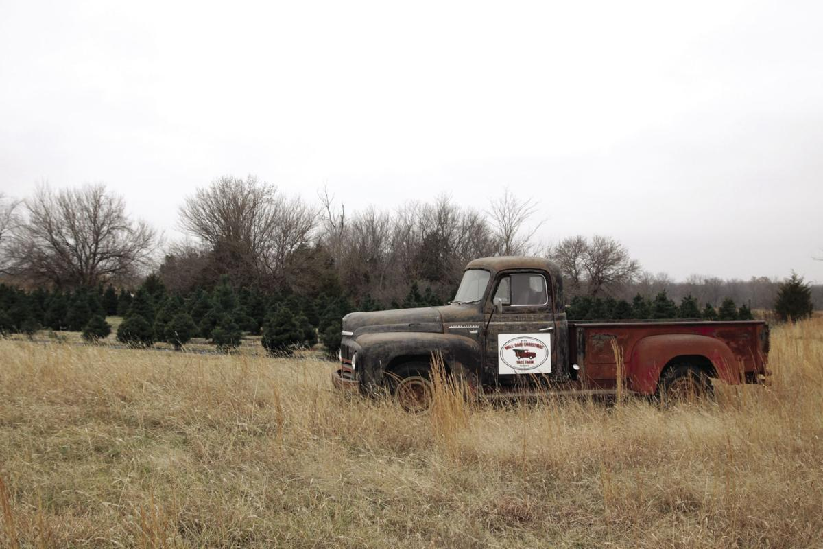 Christmas Tree Farm Brings Holiday Spirit, Non-traditional