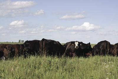 Luthi Cattle Co.