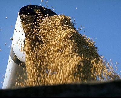 soybean auger