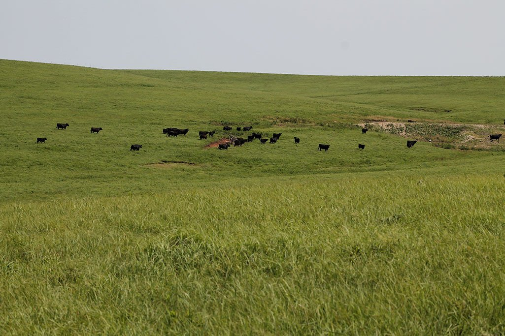 Lease Rates Decrease For Flint Hills Stockers News