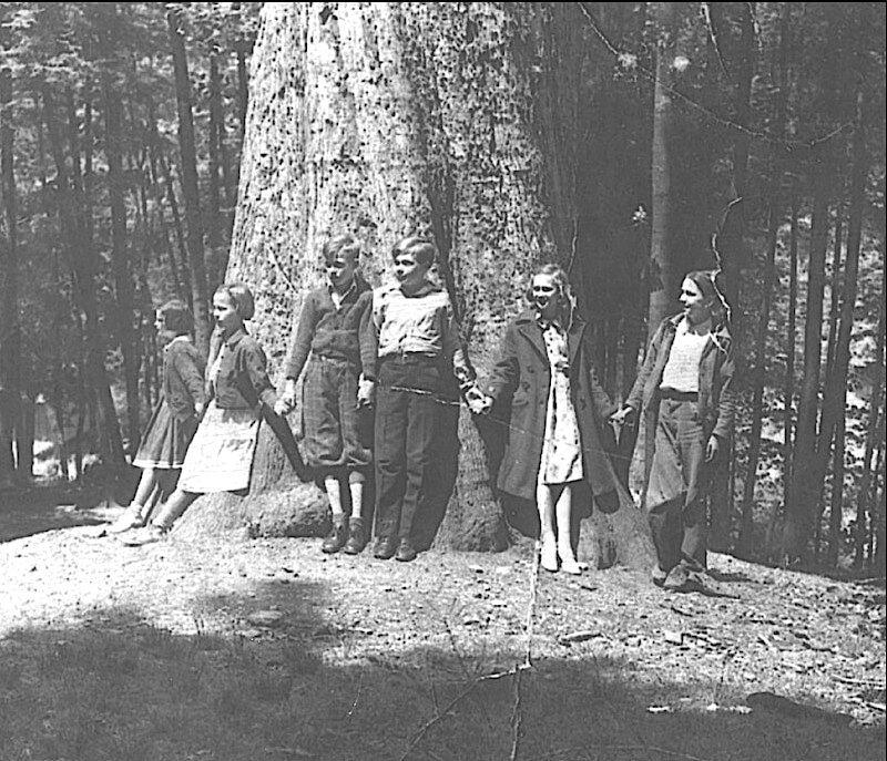 Mingo oak