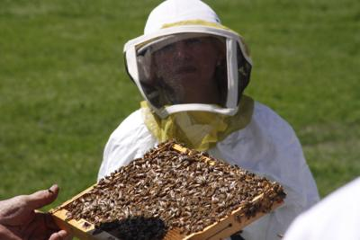 Property Taxes Can Be Lowered By Keeping Bees