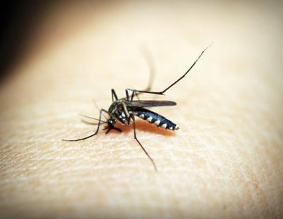 City of Richmond to spray for mosquitoes