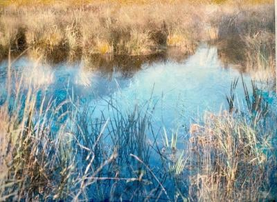 Depicting the wetlands