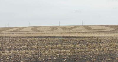 A field full of ...