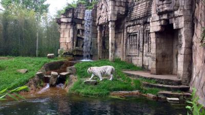 Memphis Zoo: Giant pandas, bonobos, Bengal tigers and more to see