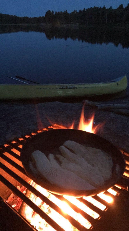 Walleye fry