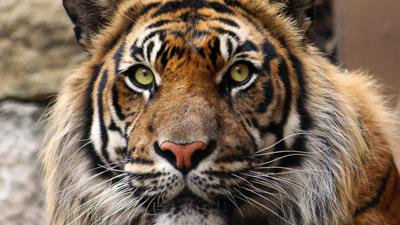 Kansas City Zoo: Africa is a highlight