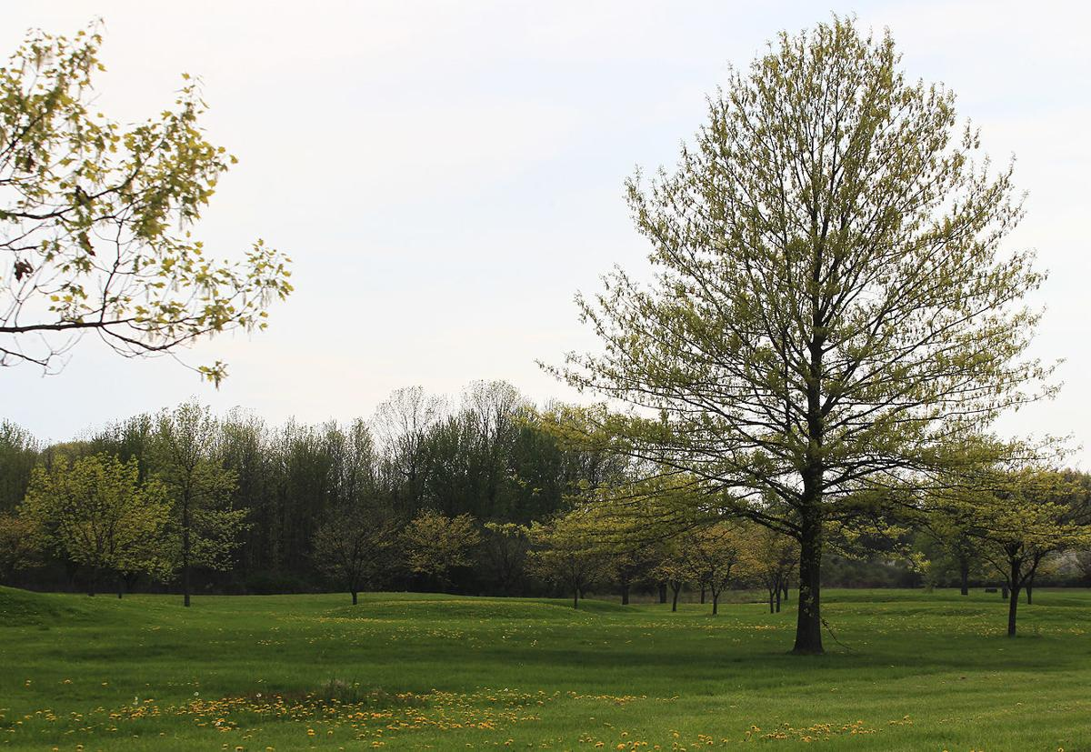 NYCC golf course will turn into 'grow zone'