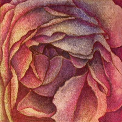 Rose in Blue and Magenta by Roberta Nelson