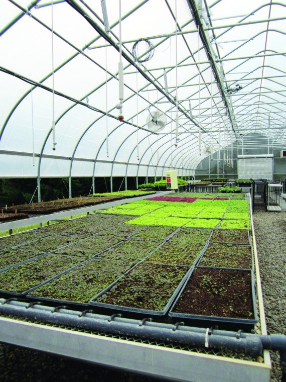 ORGANIC OASIS: Wegmans gives behind-the-scenes look at Canandaigua
