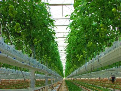 Wayne County tomato-growing project ripens | News | fltimes com