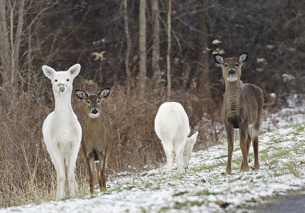 Hearing on IDA PILOT for Deer Haven Park set for Jan. 23