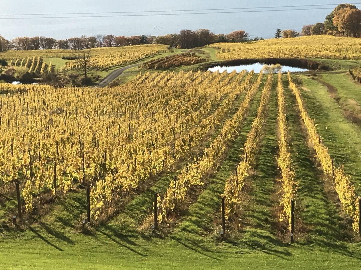 FLX wine region in heady company again