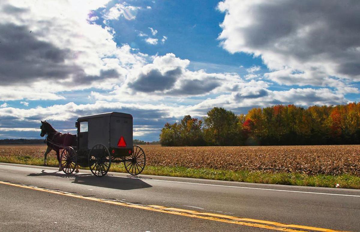 Amish in Romulus