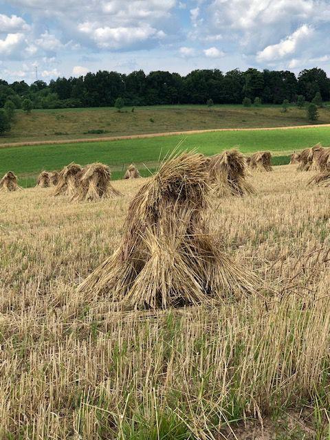 VIEWFINDER: Hay field