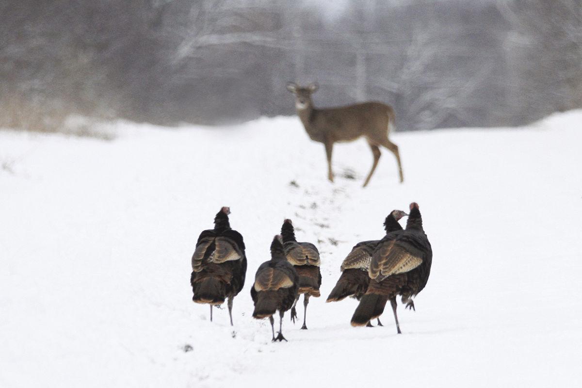 Deer Haven winter 1