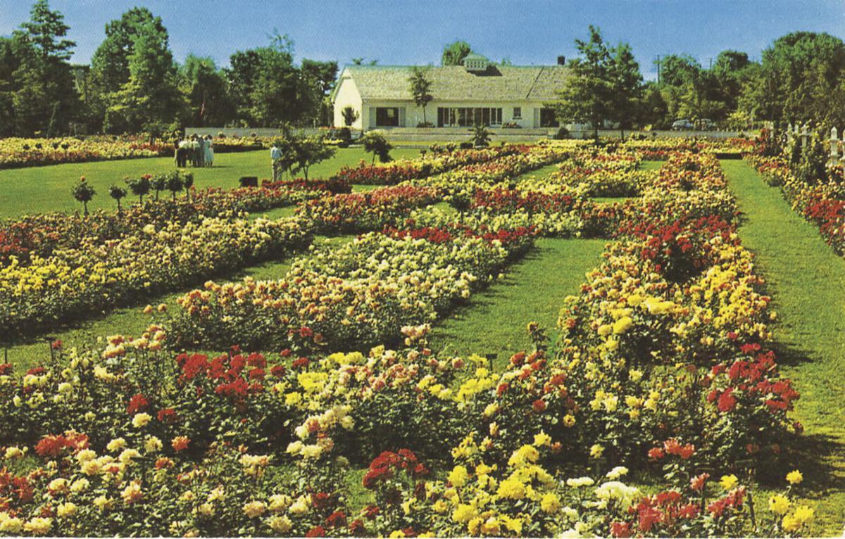 TBT Wayne Rose Gardens in Newark
