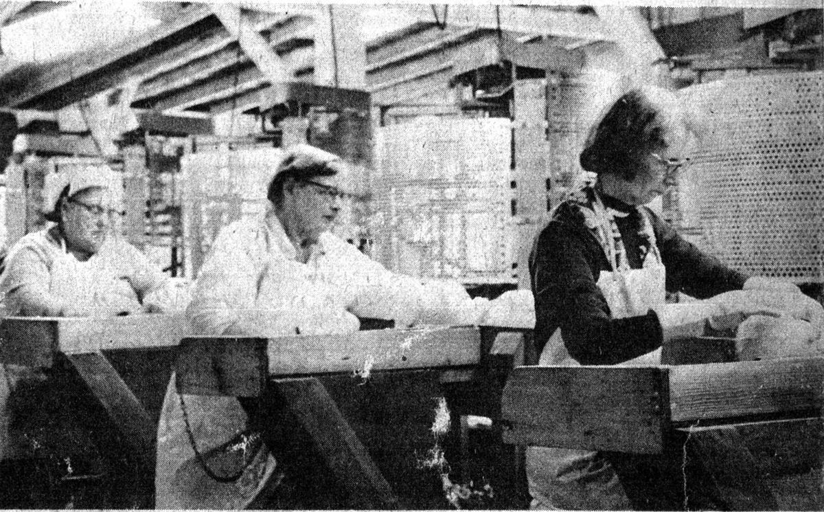 Seneca Kraut and Pickling Co.