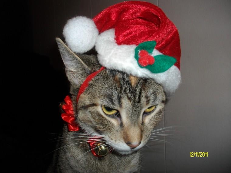 Holiday Photo Contest 2011 Fltimes Com