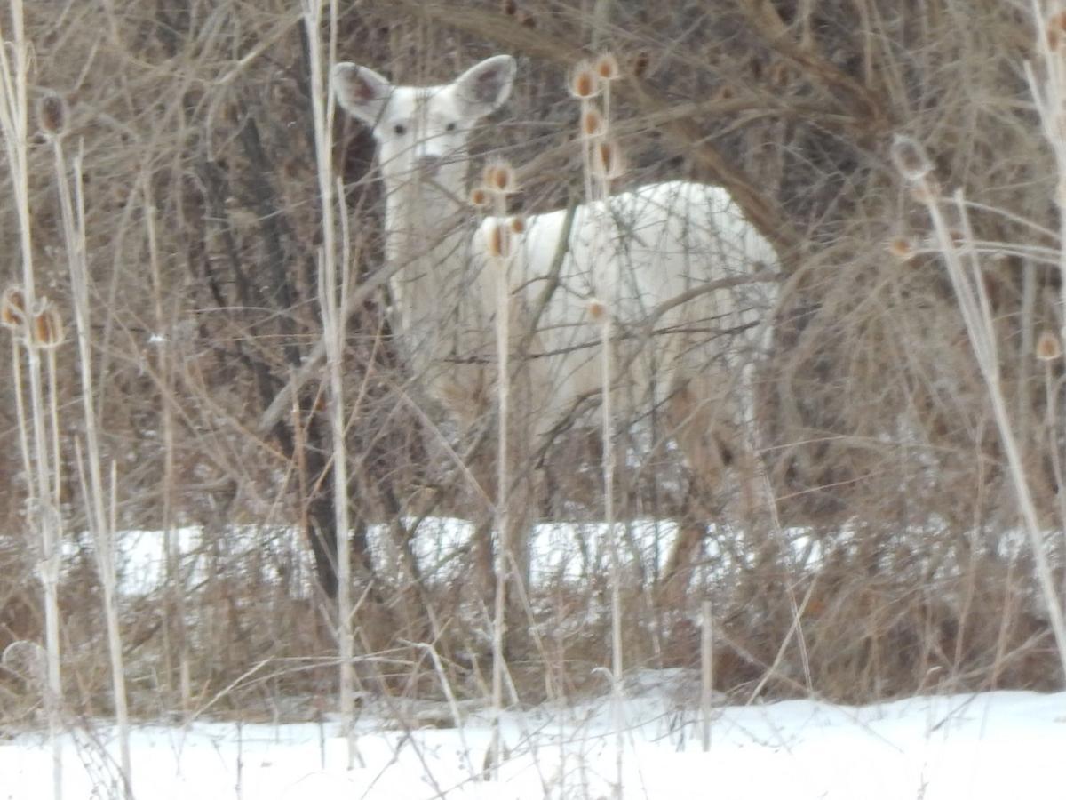 VIEWFINDER: White deer
