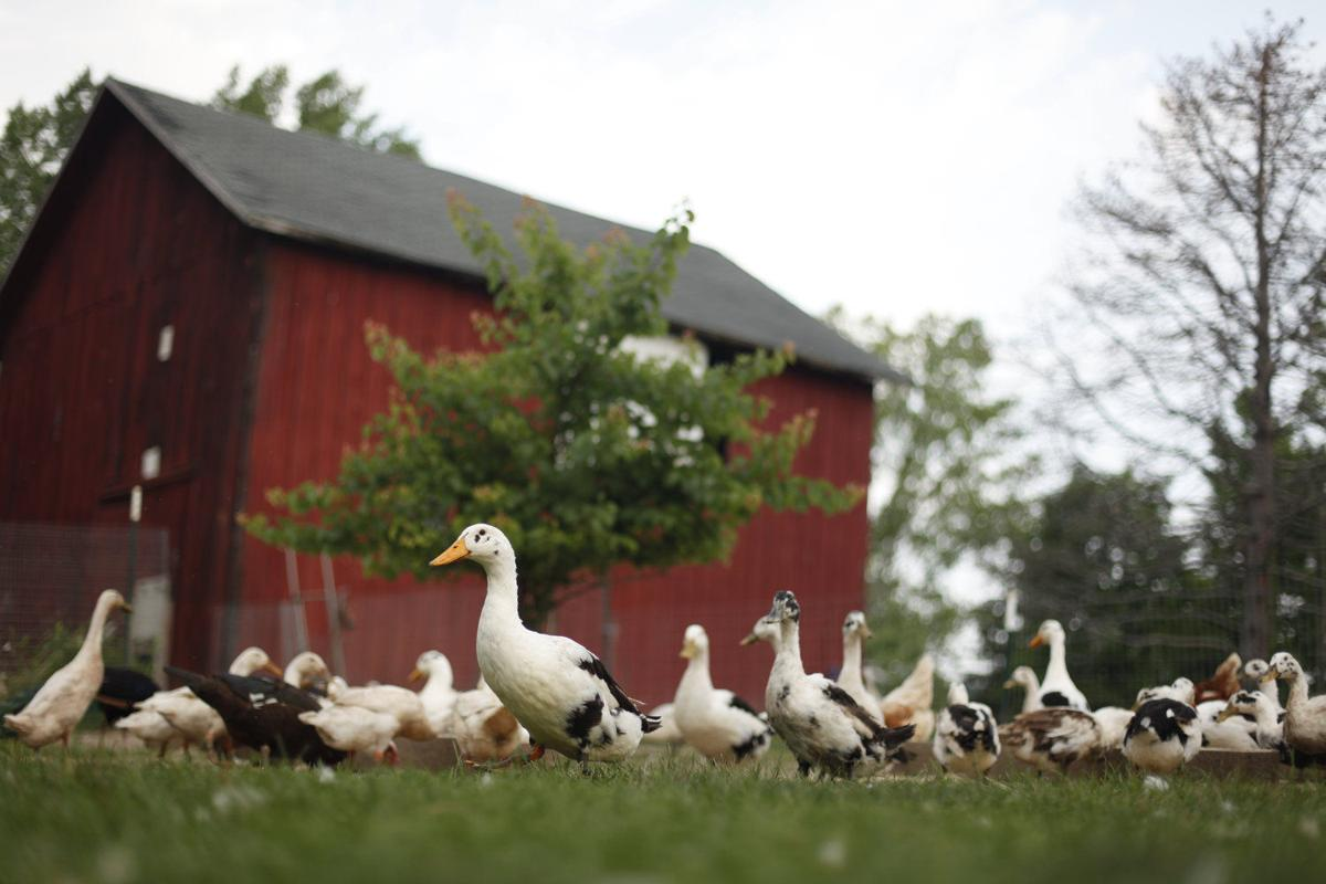 BUSINESS OF THE WEEK: Spotted Duck   Business of the Week
