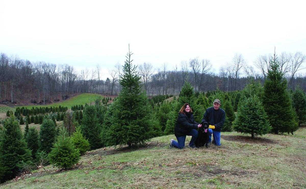 BUSINESS OF THE WEEK: Pinewood Road Christmas Tree Farm | News ...