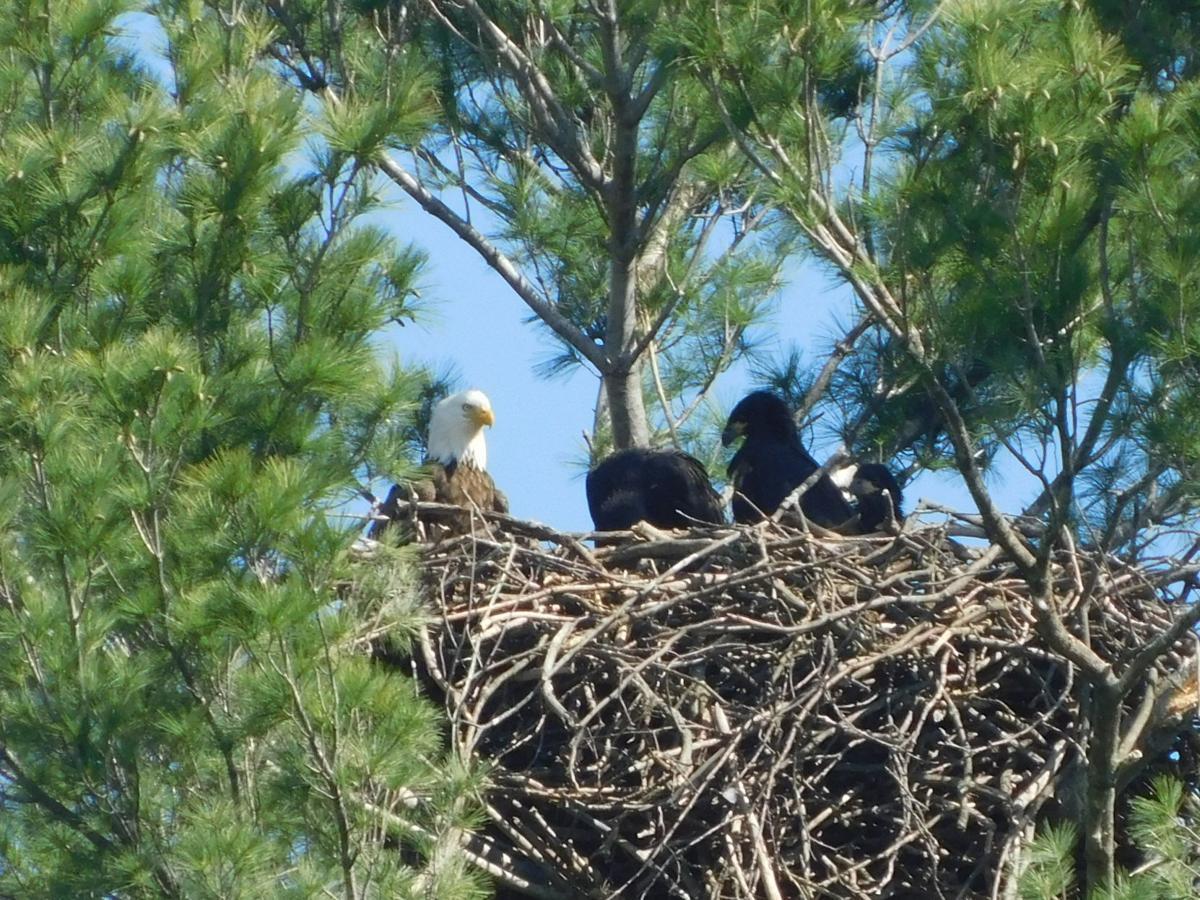 VIEWFINDER: Eagle's nest